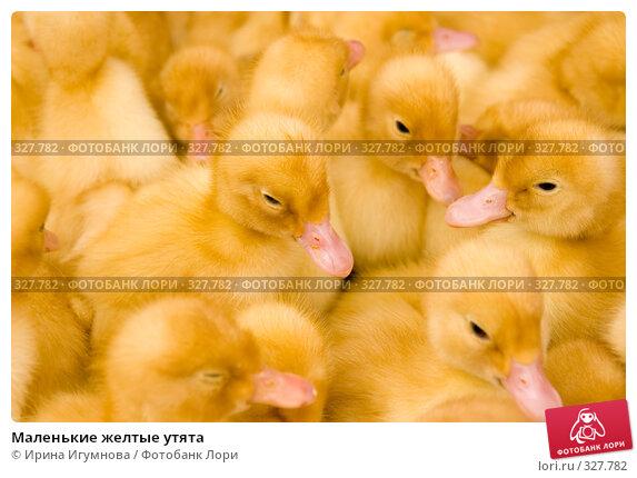 Купить «Маленькие желтые утята», фото № 327782, снято 27 мая 2008 г. (c) Ирина Игумнова / Фотобанк Лори