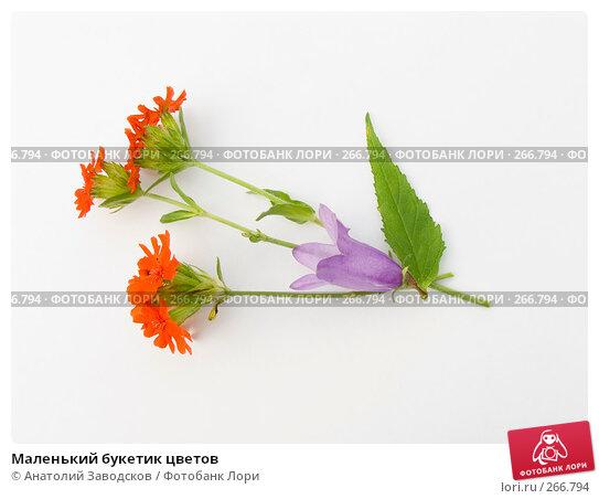 Купить «Маленький букетик цветов», фото № 266794, снято 12 августа 2006 г. (c) Анатолий Заводсков / Фотобанк Лори