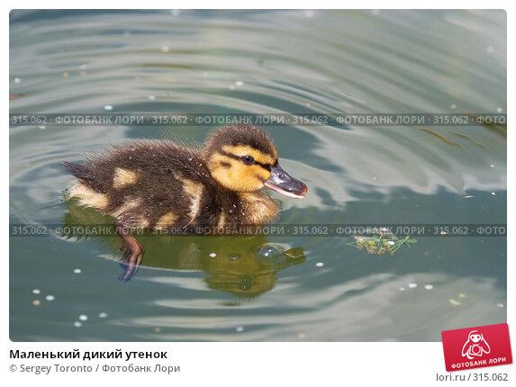 Маленький дикий утенок, фото № 315062, снято 17 мая 2008 г. (c) Sergey Toronto / Фотобанк Лори