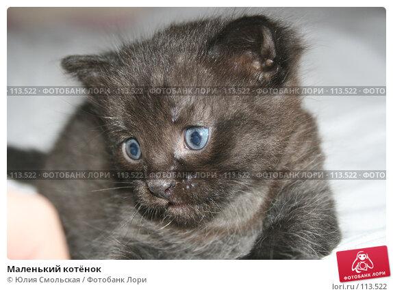 Маленький котёнок, фото № 113522, снято 7 ноября 2007 г. (c) Юлия Смольская / Фотобанк Лори
