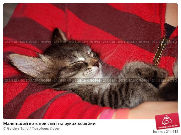 Купить «Маленький котенок спит на руках хозяйки», фото № 214918, снято 23 ноября 2007 г. (c) Golden_Tulip / Фотобанк Лори