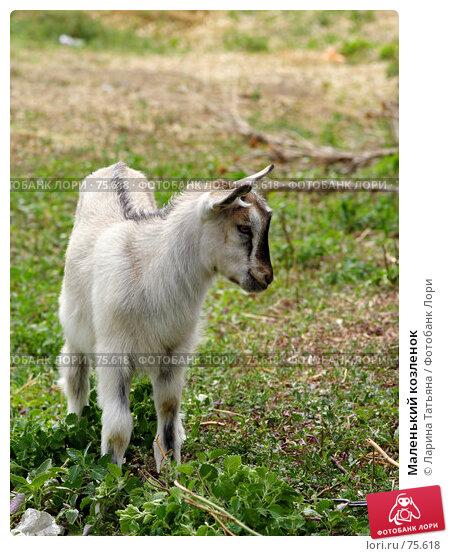 Купить «Маленький козленок», фото № 75618, снято 19 августа 2007 г. (c) Ларина Татьяна / Фотобанк Лори