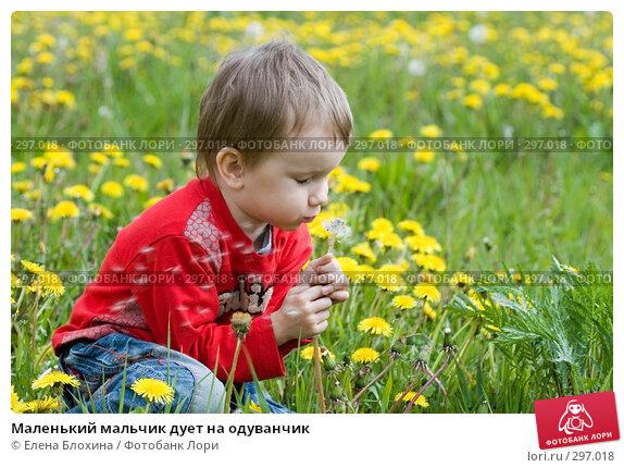 Маленький мальчик дует на одуванчик, фото № 297018, снято 18 мая 2008 г. (c) Елена Блохина / Фотобанк Лори