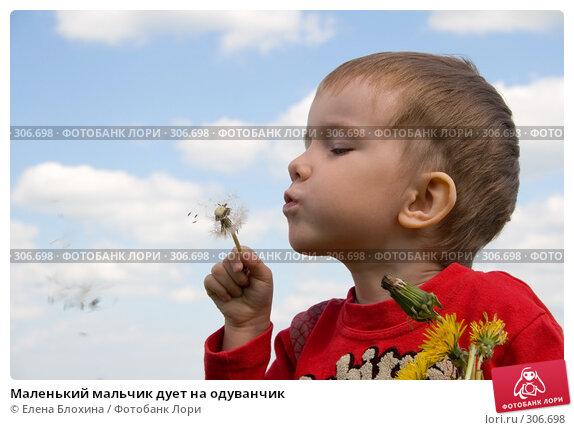 Маленький мальчик дует на одуванчик, фото № 306698, снято 27 мая 2008 г. (c) Елена Блохина / Фотобанк Лори