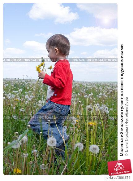 Маленький мальчик гуляет на поле с одуванчиками, фото № 306674, снято 27 мая 2008 г. (c) Елена Блохина / Фотобанк Лори