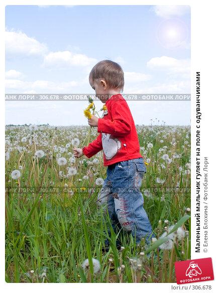 Маленький мальчик гуляет на поле с одуванчиками, фото № 306678, снято 27 мая 2008 г. (c) Елена Блохина / Фотобанк Лори