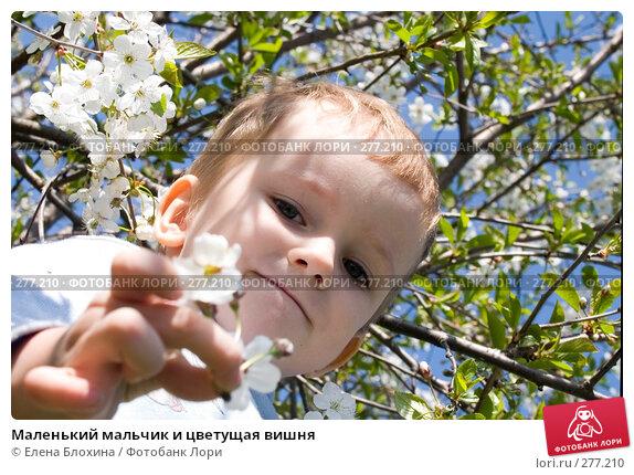 Маленький мальчик и цветущая вишня, фото № 277210, снято 3 мая 2008 г. (c) Елена Блохина / Фотобанк Лори