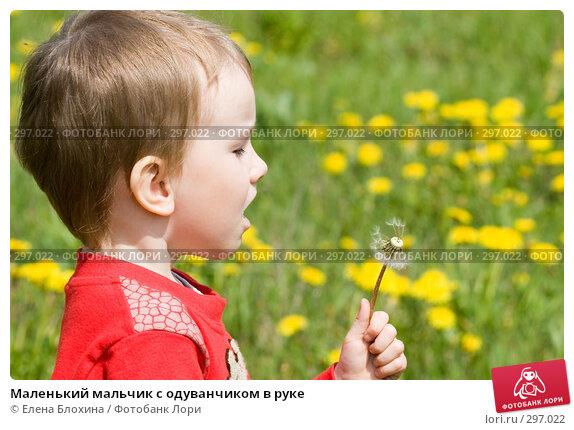 Маленький мальчик с одуванчиком в руке, фото № 297022, снято 18 мая 2008 г. (c) Елена Блохина / Фотобанк Лори