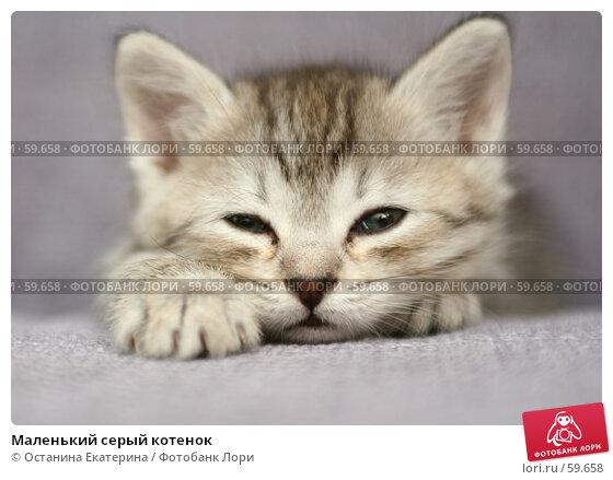 Маленький серый котенок, фото № 59658, снято 4 июля 2007 г. (c) Останина Екатерина / Фотобанк Лори