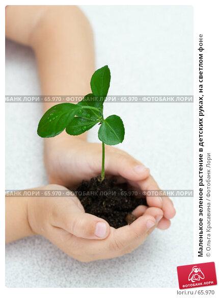 Маленькое зеленое растение в детских руках, на светлом фоне, фото № 65970, снято 28 июля 2007 г. (c) Ольга Красавина / Фотобанк Лори