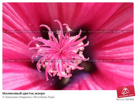 Малиновый цветок,макро, фото № 69094, снято 3 августа 2007 г. (c) Ханыкова Людмила / Фотобанк Лори