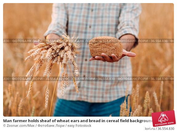 Man farmer holds sheaf of wheat ears and bread in cereal field background... Стоковое фото, фотограф Zoonar.com/Max / easy Fotostock / Фотобанк Лори