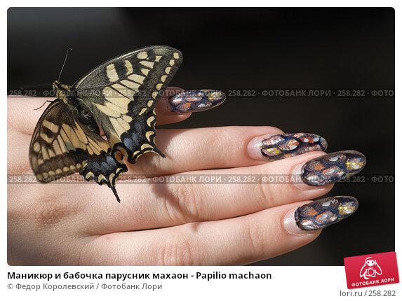 Купить «Маникюр и бабочка парусник махаон - Papilio machaon», фото № 258282, снято 21 апреля 2008 г. (c) Федор Королевский / Фотобанк Лори