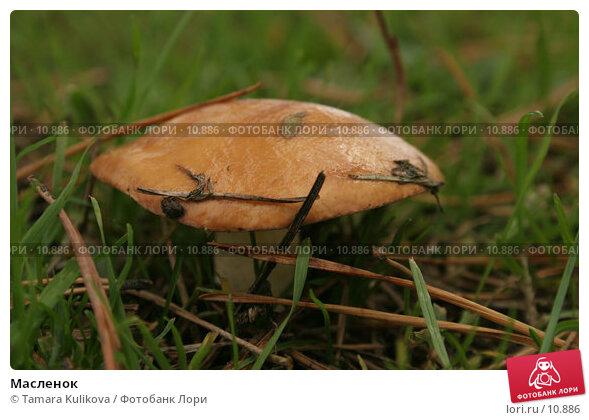 Масленок, фото № 10886, снято 8 октября 2006 г. (c) Tamara Kulikova / Фотобанк Лори