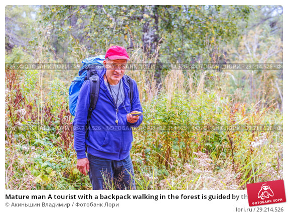 Купить «Mature man A tourist with a backpack walking in the forest is guided by the navigator.», фото № 29214526, снято 6 сентября 2017 г. (c) Акиньшин Владимир / Фотобанк Лори
