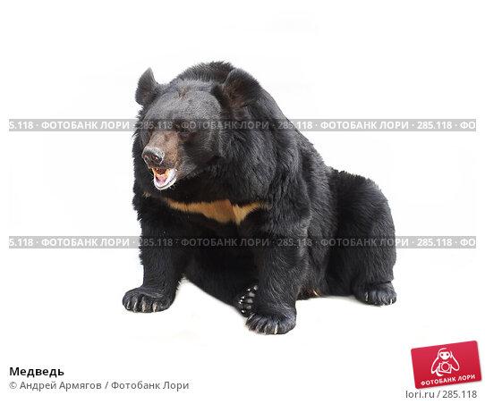 Медведь, фото № 285118, снято 1 июня 2006 г. (c) Андрей Армягов / Фотобанк Лори