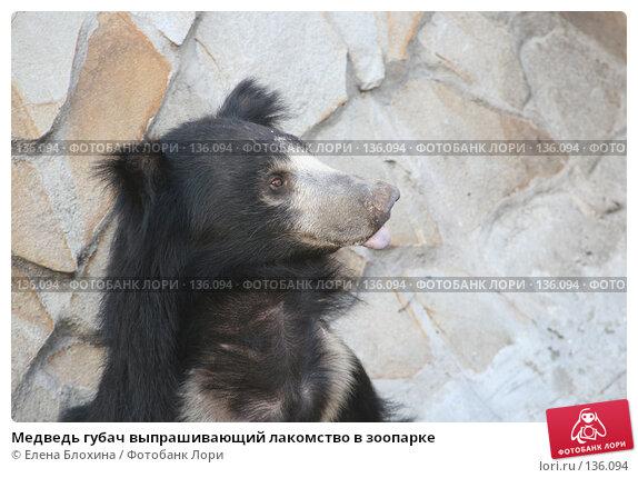 Медведь губач выпрашивающий лакомство в зоопарке, фото № 136094, снято 2 октября 2007 г. (c) Елена Блохина / Фотобанк Лори
