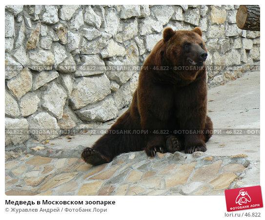 Купить «Медведь в Московском зоопарке», эксклюзивное фото № 46822, снято 20 августа 2006 г. (c) Журавлев Андрей / Фотобанк Лори