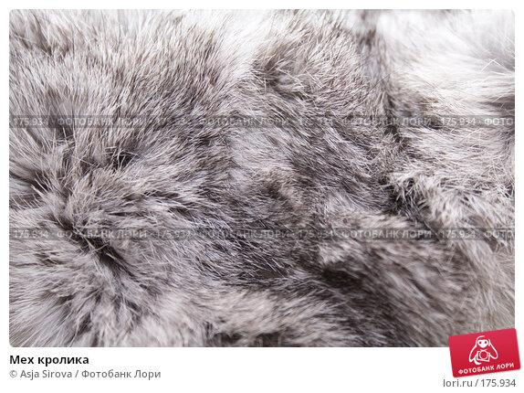 Купить «Мех кролика», фото № 175934, снято 13 января 2008 г. (c) Asja Sirova / Фотобанк Лори