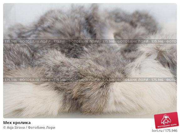 Купить «Мех кролика», фото № 175946, снято 13 января 2008 г. (c) Asja Sirova / Фотобанк Лори