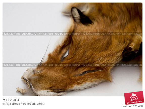 Мех лисы, фото № 121430, снято 19 ноября 2007 г. (c) Asja Sirova / Фотобанк Лори