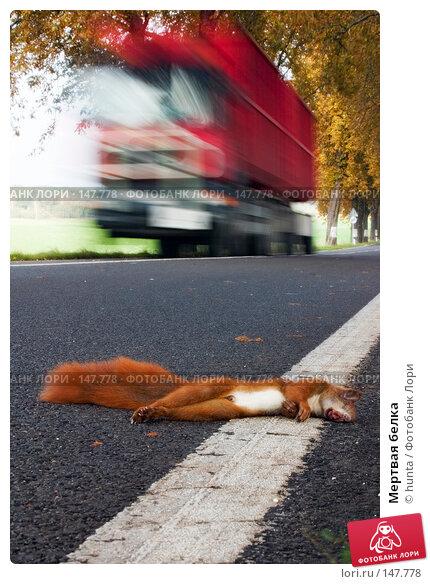 Мертвая белка, фото № 147778, снято 27 сентября 2004 г. (c) hunta / Фотобанк Лори