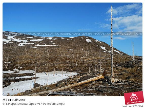 Мертвый лес, фото № 270394, снято 2 мая 2008 г. (c) Валерий Александрович / Фотобанк Лори