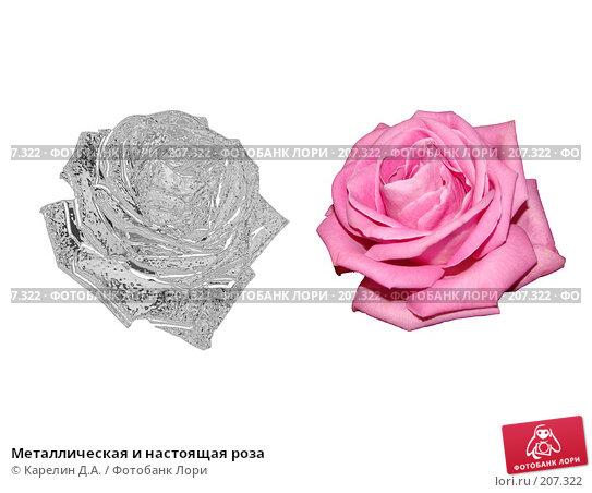 Металлическая и настоящая роза, иллюстрация № 207322 (c) Карелин Д.А. / Фотобанк Лори