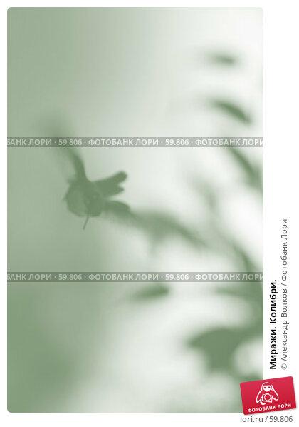 Миражи. Колибри., фото № 59806, снято 30 апреля 2007 г. (c) Александр Волков / Фотобанк Лори