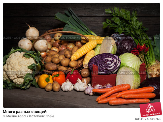 Купить «Много разных овощей», фото № 4748266, снято 24 мая 2019 г. (c) Marina Appel / Фотобанк Лори