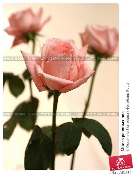 Много розовых роз, фото № 63634, снято 13 июля 2007 г. (c) Останина Екатерина / Фотобанк Лори
