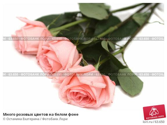 Купить «Много розовых цветов на белом фоне», фото № 63650, снято 13 июля 2007 г. (c) Останина Екатерина / Фотобанк Лори