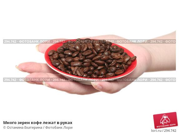 Много зерен кофе лежат в руках, фото № 294742, снято 8 декабря 2007 г. (c) Останина Екатерина / Фотобанк Лори
