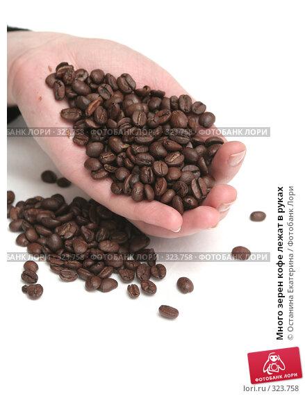Много зерен кофе лежат в руках, фото № 323758, снято 20 ноября 2007 г. (c) Останина Екатерина / Фотобанк Лори
