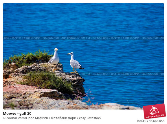 Moewe - gull 20. Стоковое фото, фотограф Zoonar.com/Liane Matrisch / easy Fotostock / Фотобанк Лори