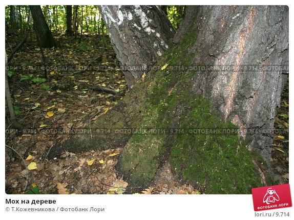 Мох на дереве, фото № 9714, снято 20 сентября 2017 г. (c) Т.Кожевникова / Фотобанк Лори