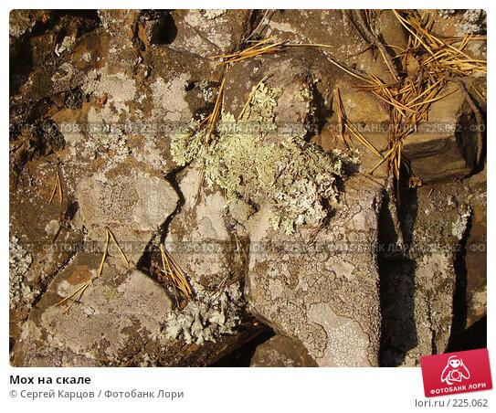 Мох на скале, фото № 225062, снято 2 октября 2005 г. (c) Сергей Карцов / Фотобанк Лори