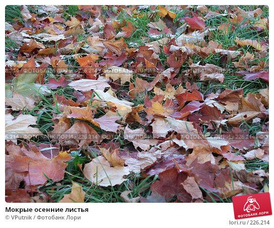 Мокрые осенние листья, фото № 226214, снято 4 октября 2005 г. (c) VPutnik / Фотобанк Лори