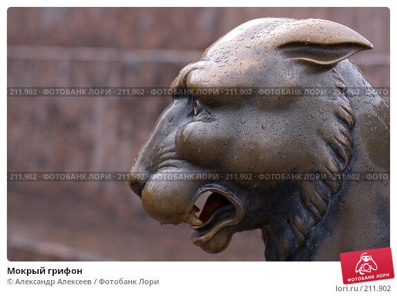 Мокрый грифон, эксклюзивное фото № 211902, снято 21 марта 2007 г. (c) Александр Алексеев / Фотобанк Лори