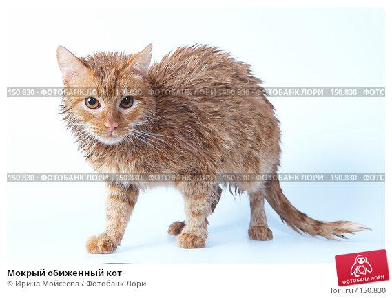 Мокрый обиженный кот, фото № 150830, снято 16 декабря 2007 г. (c) Ирина Мойсеева / Фотобанк Лори