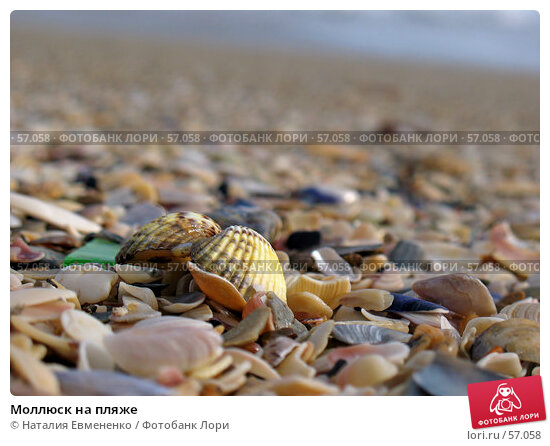 Моллюск на пляже, фото № 57058, снято 29 января 2007 г. (c) Наталия Евмененко / Фотобанк Лори
