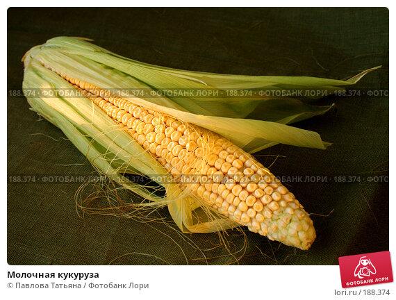 Молочная кукуруза, фото № 188374, снято 25 августа 2007 г. (c) Павлова Татьяна / Фотобанк Лори