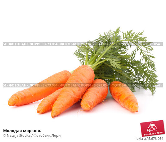 Купить «Молодая морковь», фото № 5673054, снято 27 марта 2012 г. (c) Natalja Stotika / Фотобанк Лори