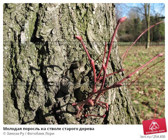 Молодая поросль на стволе старого дерева, фото № 254430, снято 12 апреля 2008 г. (c) Заноза-Ру / Фотобанк Лори