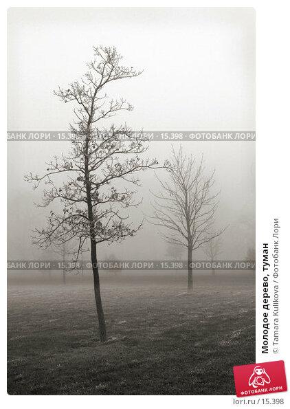 Молодое дерево, туман, фото № 15398, снято 19 декабря 2006 г. (c) Tamara Kulikova / Фотобанк Лори