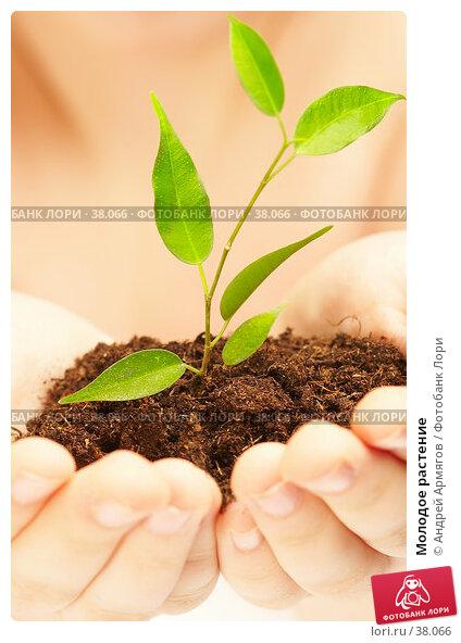 Молодое растение, фото № 38066, снято 19 марта 2007 г. (c) Андрей Армягов / Фотобанк Лори