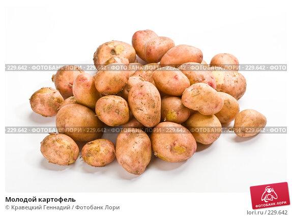 Молодой картофель, фото № 229642, снято 17 июля 2005 г. (c) Кравецкий Геннадий / Фотобанк Лори
