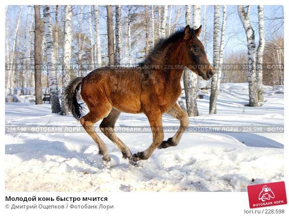 Молодой конь быстро мчится, фото № 228598, снято 8 марта 2008 г. (c) Дмитрий Ощепков / Фотобанк Лори