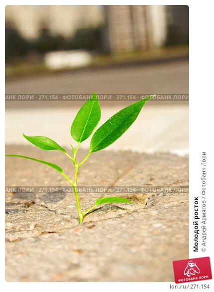 Молодой росток, фото № 271154, снято 8 июня 2007 г. (c) Андрей Армягов / Фотобанк Лори