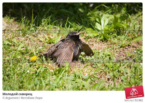 Молодой скворец, фото № 53982, снято 14 июня 2007 г. (c) Argument / Фотобанк Лори